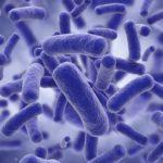 Descubren mecanismo utilizado por algunas bacterias para resistir a los antibióticos
