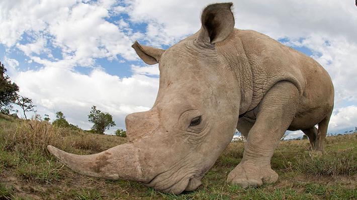 Caza de Rinocerontes -